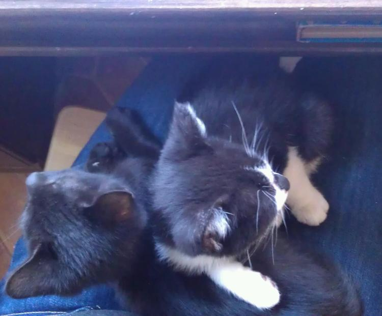 kittens in my lap!
